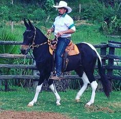 Fancy Mule!