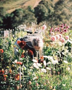 picking some flowers