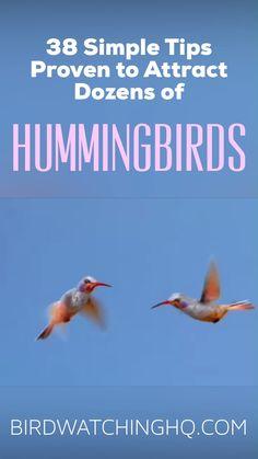 hummingbird food recipe no boil * hummingbird food ; hummingbird food recipe no boil ; hummingbird food no boil Flowers That Attract Hummingbirds, How To Attract Birds, Attracting Hummingbirds, Hummingbird Flowers, Hummingbird Garden, Hummingbird Migration, Hummingbird Quotes, Angry Birds, Pet Birds