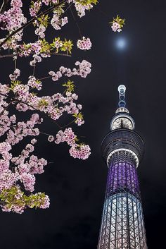 Tokyo SkyTree, Japan Visit at night - i had such a beautiful view I want to go there again ^^ Tokyo Skytree, Go To Japan, Japan Art, Japan Japan, All About Japan, Japan Landscape, Tokyo Tower, Tokyo Travel, Photos Voyages