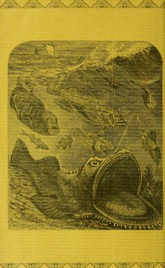 1885-88 - Transactions of the American Fisheries Society. - Biodiversity Heritage Library   fishes