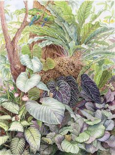 Marion Perkins - The Society of Botanical Artists Tropical Garden, Tropical Plants, Tropical Flowers, Drawing Rain, Painting & Drawing, Mural Art, Parrots, Botanical Art, Teaching Art