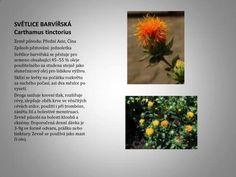 Náhled do zahrady - Nadeje-byliny.eu