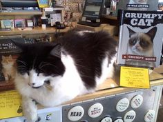 Bookstore cat-approved!
