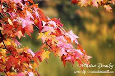 Audubon State Park, Henderson, KY