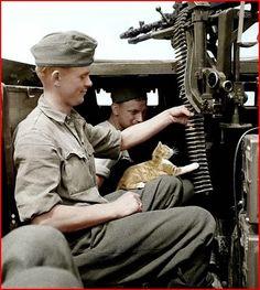 Cat in Sd.Kfz.250 | http://worldwartwo.filminspector.com/2014/11/cats-in-world-war-ii.html