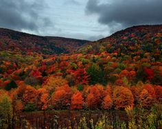 road trip by car or motorcycle to see beautiful fall colors on the trees!  Do it every yr.