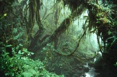 RAINFOREST, TANZANIA. Kilamanjaro. This photograph is one of the pictures submitted to the United Nations Environment Programme competition, Focus on Your World.