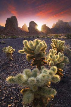 Sunburnt - Kofa Mountains - Arizona - USA
