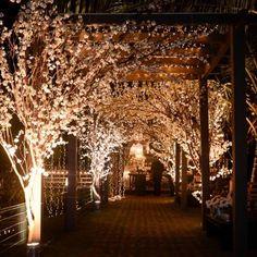 Entrada triunfante... Que tal chegar à uma festa com esse caminho repleto de cerejeiras e minilâmpadas? Lindo! /// Cherry trees and small lamps in a lovely party #decor. Photo: @ flor_e_cia. #decoração #festa #casamento #cerejeiras #wedding #cherrytrees #party #decoration