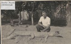 Taken in the 1930's. This crocodile was caught by cane farmers in North Queensland, Australia.