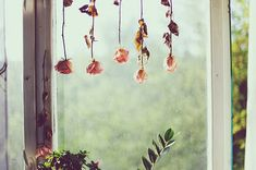 drying of flowers is my new DIY