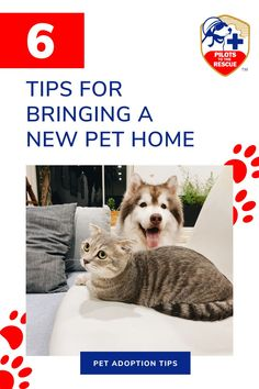 Whether you've had your pet for many years or have recently adopted them, it's essential that you take steps to help them settle comfortably into their new living environment. From prioritizing their health to providing them with a routine to ensuring they are cared for on adoption day, here are some practical tips for helping your pet adjust to a new home. Adoption Day, Adoption Process, Incredible Gifts, Moving Day, Living Environment, Pet Home, Behavior, Your Pet