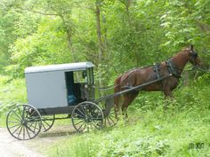 Amish Rest Stop Judy Orcutt