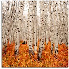 my favorite trees.