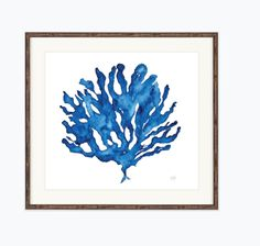 Created by an Australian artist this beautiful watercolour print series is an ode to the fragile nature and beauty of coral. Printed as a giclee on fine quality