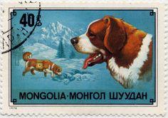 Mongolia 1978 - St. Bernard on postage stamp