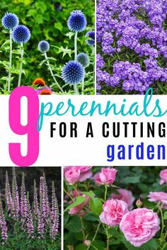 The Best Full Sun Perennials For A Summer Cutting Garden (in zones 4 to - Gardening @ From House To Home - These full sun perennials have beautiful flowers, are long blooming and low maintenance plants that are perfect for a summer cutting garden. Full Sun Perennials, Full Sun Plants, Flowers Perennials, Full Sun Garden, Shade Perennials, Cut Flower Garden, Flower Farm, Cut Garden, Flower Garden Design
