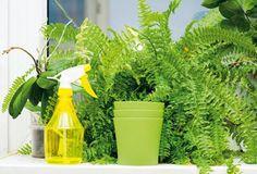 Čo potrebujú jednotlivé druhy izbových rastlín, aby sa im darilo? Gardening Tips, Planter Pots, Home And Garden, Herbs, Flowers, Plants, Ideas Para, House, Indoor Plants