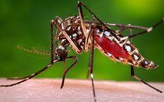 Zika Market Research http://www.marketresearchmedia.com/?p=21