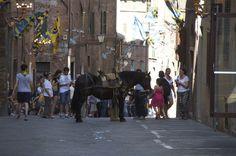 Siena 2 Luglio 2014 - Palio - Horse for the Parade (soprallasso) - contrada della Tartuca