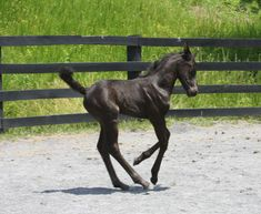 born for the dressage ring!! :)