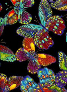 Glimmer Butterflies - Timeless Treasures - 1 yard - Last Available by BywaterFabric on Etsy