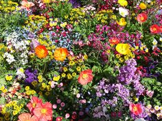 My friend took this picture in Germany. It was so dreaming gorgeous I had to share. Garden Seeds, Garden Plants, Dark Fantasy, Wallpaper Gratis, Flower Show, Flower Fashion, Heaven On Earth, Something Blue, Summer Colors