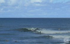 Kalihiwai Beach: A classic surfing bay and beach, Kalihiwai is a local favorite for easy drive up convenience and refreshing river access. Hawaii Surf, Kauai Hawaii, Professional Surfers, Learn To Surf, North Shore, Hawaiian, Surfing, World, Beach