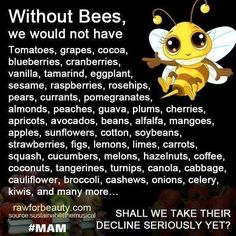 Flowers And Their Friends To Bee Pinterest Bees