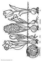 Kids-n-Fun coloring page- Ausmalbild Zwiebeln Kids-n-Fun Kids-n-Fun coloring page - Elementary Science, Science For Kids, Art For Kids, Crafts For Kids, Spring Art, Spring Crafts, Cool Coloring Pages, Coloring Books, Plant Science