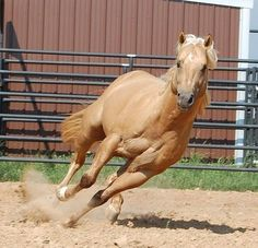Gorgeous American Quarter Horse That Will Take Your Breath Away