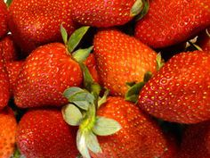The Sweet Charlie Strawberry is, as the name implies, very sweet, even when eaten right off the plant. They are very vigorous, and produce large fruit, yielding high crops that are disease resistant. The strawberries of the Sweet Charlie Strawberry plant are medium in size, with a deep red color. The Sweet Charlie is the top commercial strawberry variety grown in Florida.