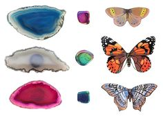 Image of Crystal Butterfly Magnet Set