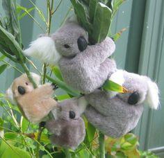 Koala clips. Il mio resiste ancora aggrappato a una sedia da campeggio!!!