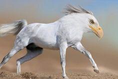 fotoshop dieren - Google zoeken