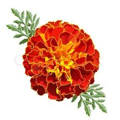 Marigold tattoo as part of a sisterly one I have in the works!
