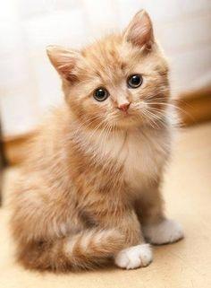 Cute little blondie