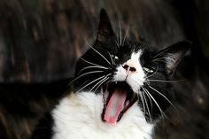 Yawn by Denise Irving