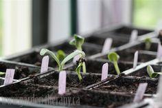 Starting seeds information