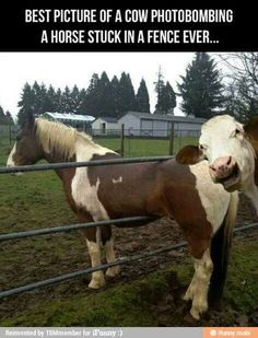 I laughed at this for one reason. HOW did that horse get stuck in the fence???