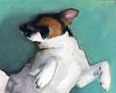 Jack Russell Terrier--This is SO our dog Cooper. He's always rolling onto his back so you can scratch his belly.
