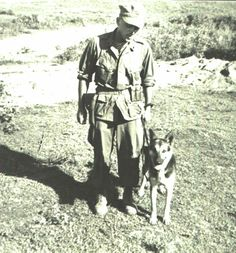 Some handlers in Vietnam would reenlist so they could stay with their dogs a little longer rather than let them face the terrible fate of most Vietnam military working dogs. Former Marine dog handler Ron Aiello, here with his MWD Stormy, would go on to found the national nonprofit organization, the United States War Dogs Association, to better conditions for dogs and handlers and create more public awareness of working dog teams. (See Resources for more on this group.) (Photo courtesy of Ron…