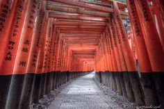 thousands of torii gates by Hidenobu Suzuki on 500px