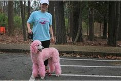 """""""*Eli* - The Pink Valentine Poodle"""" ---- [Tom Hodge took this photo of *Eli* while on his biking excursion in Newport News Park - Newport News, Virginia. This handsome brute is a male standard poodle. He says the  owner, 'Katie', used a pink water soluble hair coloring to make him look pretty!]~[Photograph by Tom Hodge - February 13.2013 - Newport News, Virginia]h4d-454.2013"""