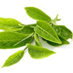 Zeleni čaj za vaše zdravlje i mršavljenje