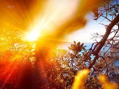 Sunshine Coast that time... . #throwback #shareyoursunset #horizons #gx85 #snapseed #discoverqueensland