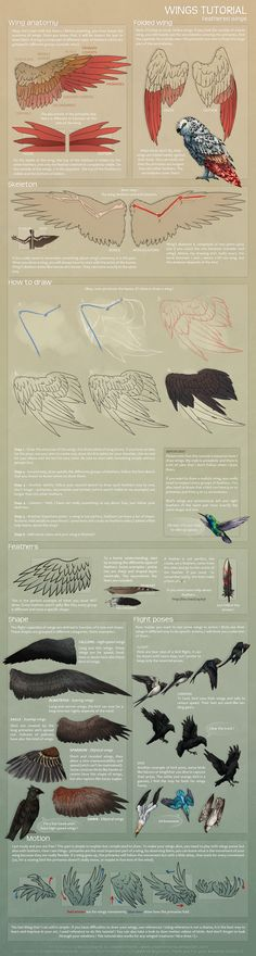 Feathered wings - Tutorial by ShadeDreams