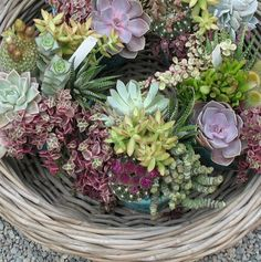 I love indigenous flowers! Reminds me of the proteas and fynbos I had at my wedding. Earthy Home, Drought Tolerant Plants, Plant Species, Color Stripes, Succulents Garden, Flower Vases, Color Inspiration, Floral Arrangements, Wedding Flowers