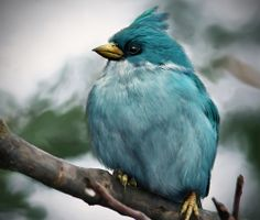 Gorgeous teal colored bird-no information on what he is
